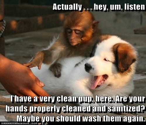 clean,dont-touch,monkey,polite,puppy,wash your hands