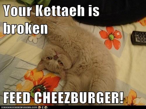 Cheezburger Image 6139126272