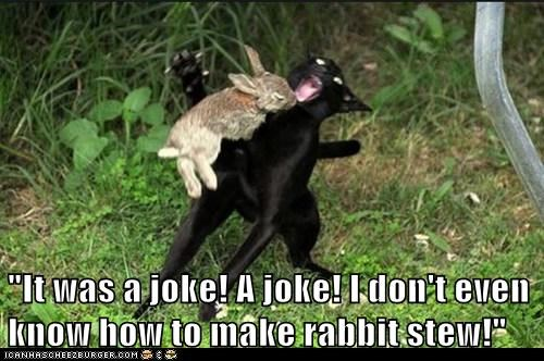 aah,attack,attacking,bite,Cats,danger,Interspecies Love,jokes,maul,neck,rabbit,rabbit stew,rabbits,stew,vs