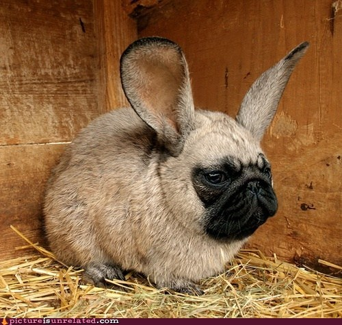 pug rabbit shopped pixels wtf