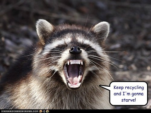 angry,food,guilt trip,hungry,racoon,recycling,starve,yelling