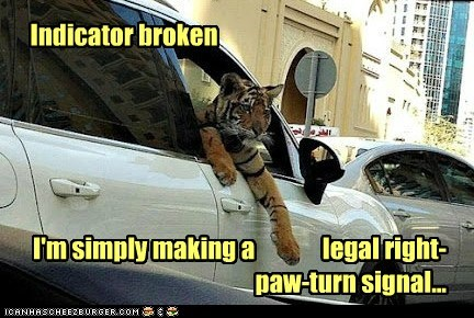 broken,cars,driving,hand signals,paw,tiger,traffic,turn signal
