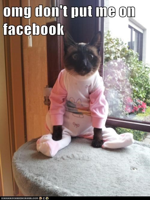best of the week cat Cats costume dressed up dumb embarassing facebook Hall of Fame outfit