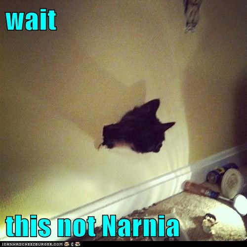 break cat head narnia reference the lion the witch and the warddrobe wall - 6140812288