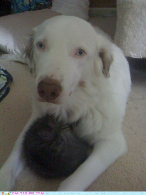 dogs kitten pets reader squees snuggles - 6141050624