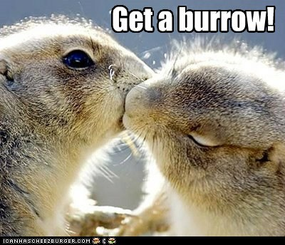 get a room,kissing,love,PDA,prarie dogs