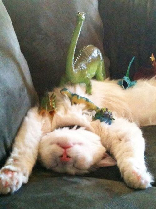 cat catnap Caturday dinosaur Photo