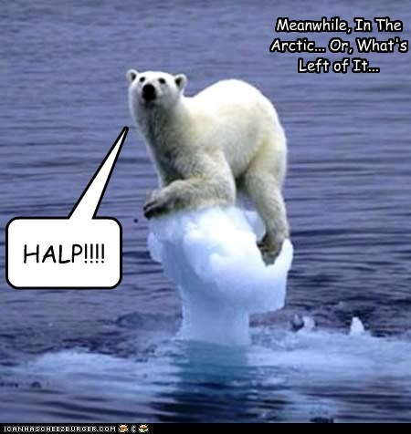 HALP!!!! Meanwhile, In The Arctic... Or, What's Left of It...