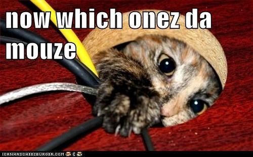 Cheezburger Image 6142091520