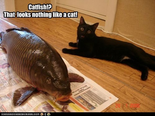 Catfish!? That looks nothing like a cat!