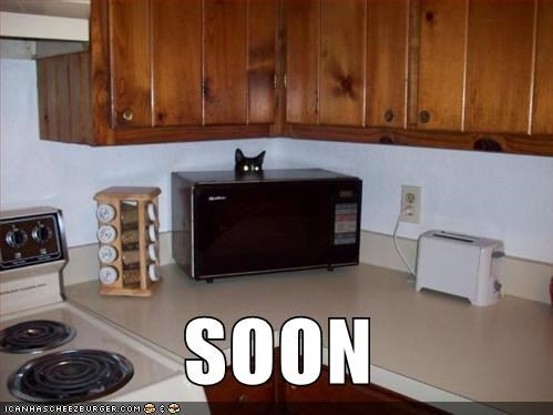SOON captions kitchen hide Cats microwave