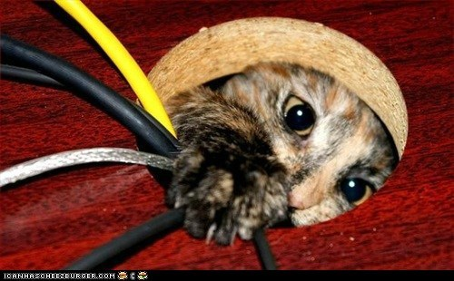 Cheezburger Image 6143070976