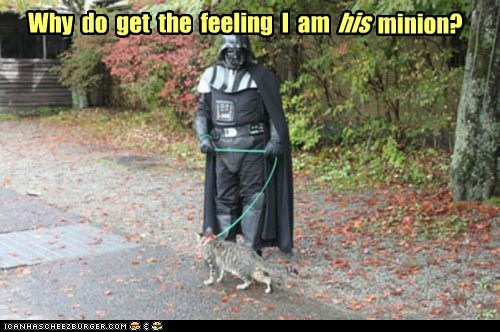boss,cat,darth vader,minion,star wars,walk,why