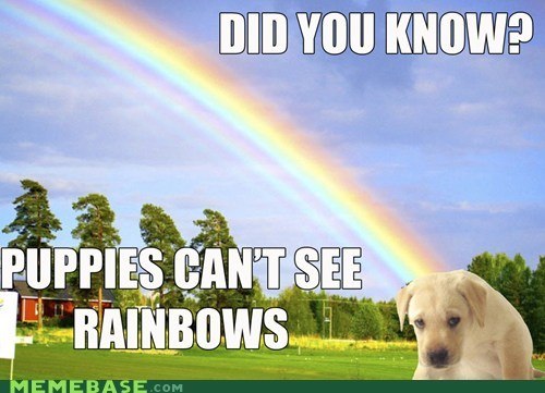 colorblind Memes puppies rainbows - 6143896064