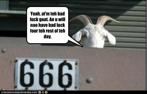 Bad luck goat strikes again