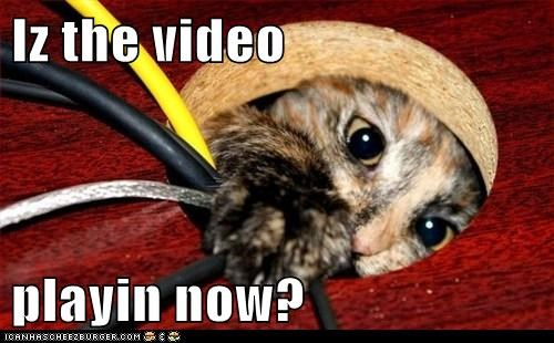 Cheezburger Image 6144520704