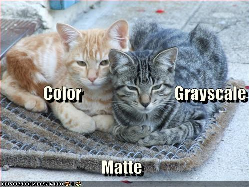 gray lolcats orange - 614453504