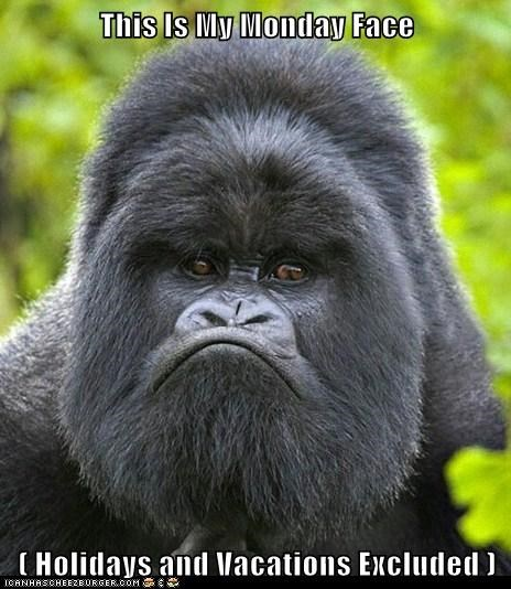 angry,best of the week,expressions,gorilla,gorillas,grumpy,Hall of Fame,holiday,monday,mondays,tired,vacation,work
