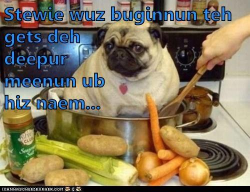 Cheezburger Image 6144819968