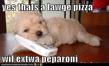maltese,phone,pizza,puppy