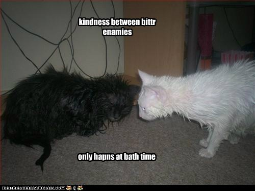 basement cat,bath time,enemies,captions,bath,ceiling cat,Cats