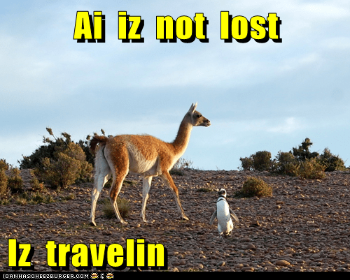color,desert,llama,lost,penguin,traveling
