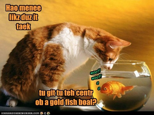 fish cat goldfish bowl how many licks lick tootsie pop - 6145174528
