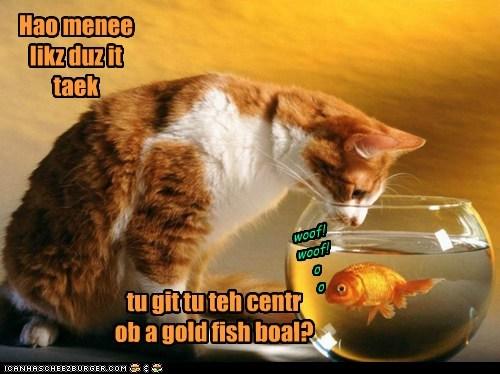 fish cat goldfish bowl how many licks lick tootsie pop - 6145174528