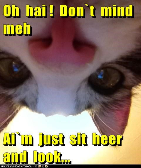 Oh hai ! Don`t mind meh Ai`m just sit heer and look...