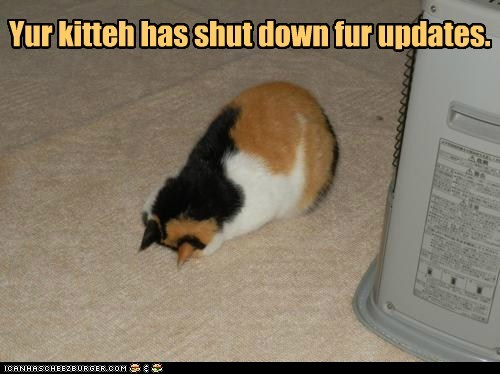 Cats computer computers lolcats off restarting shut down sleeping tired update updates