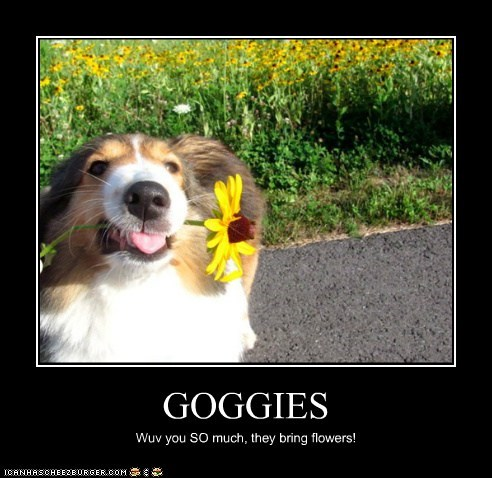 GOGGIES Wuv you SO much, they bring flowers!