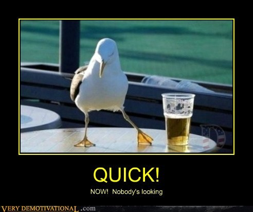 beer booze hilarious quick seagull - 6145863168
