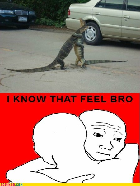 cold blooded,hugs,i know that feel bro,komodo dragon