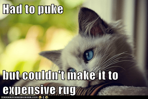 barf,Cats,first world cat problems,First World Problems,Memes,puke,puking,rug,Sad