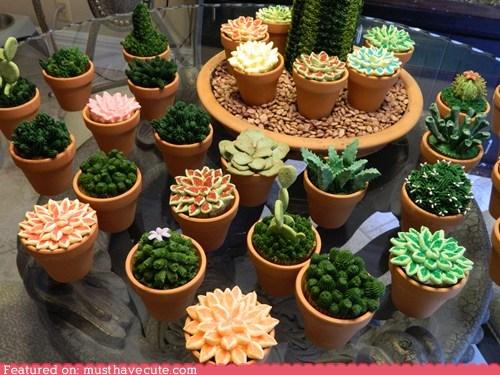 cactus,cupcakes,desert,dessert,epicute,fondant,plants,succulents