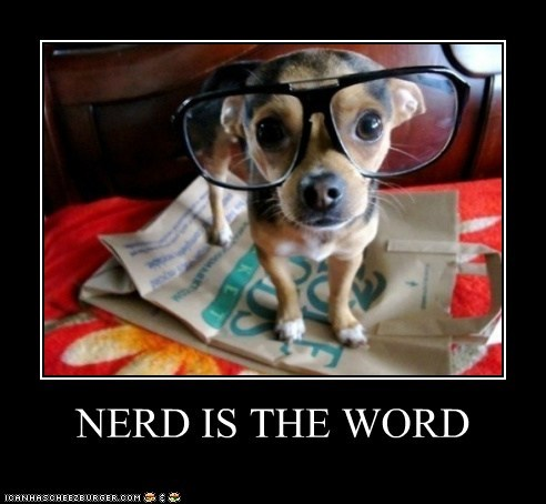 bird is the word chihuahua dogs glasses nerd nerds