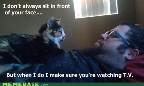 pets,the most interesting man in the world,Cats