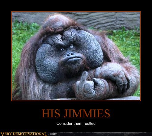 hilarious orangutan rustled my jimmies