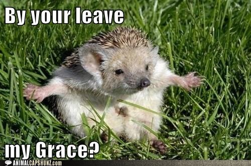 bold,curtsey,grace,hedgehog,leave,proper