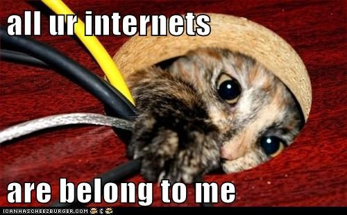 Cheezburger Image 6148599040