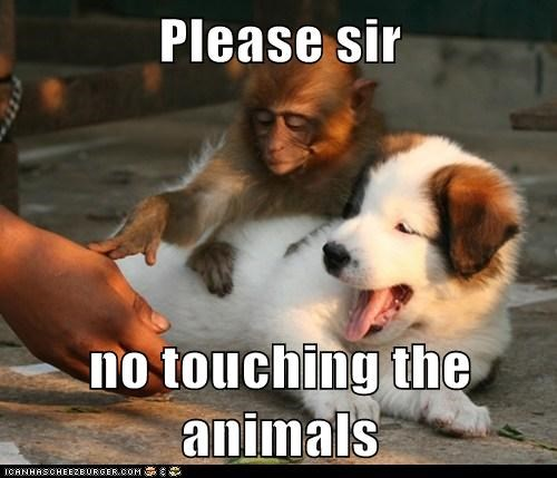 animals dont-touch hand monkey please puppy push what breed - 6148814336
