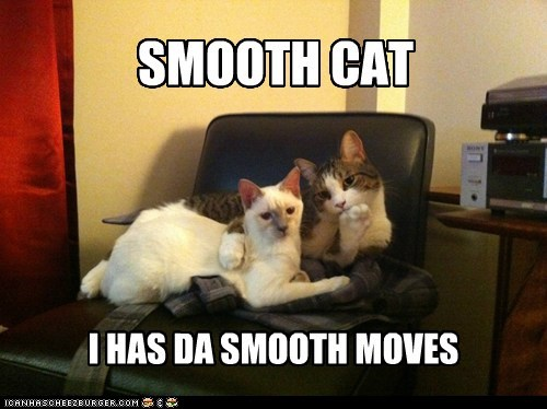 attractive cassanova Cats Hall of Fame hot ladies lolcats moves romance sexy smooth smooth moves - 6148927232