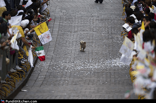 dogs mexico political pictures pope - 6148955392