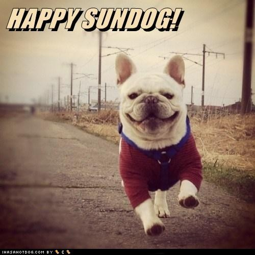 best of the week bulldog dogs Hall of Fame strolling Sundog - 6148981248