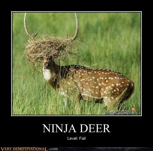 animals deer FAIL hilarious ninja - 6149455872