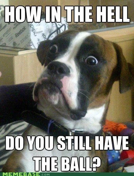 ball dumbstruck dog fetch Memes - 6149757184