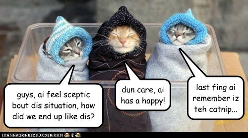 guys, ai feel sceptic bout dis situation, how did we end up like dis? dun care, ai has a happy! last fing ai remember iz teh catnip...