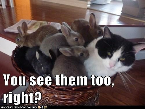 captions hallucination invisible rabbit Cats bunny - 6149960960