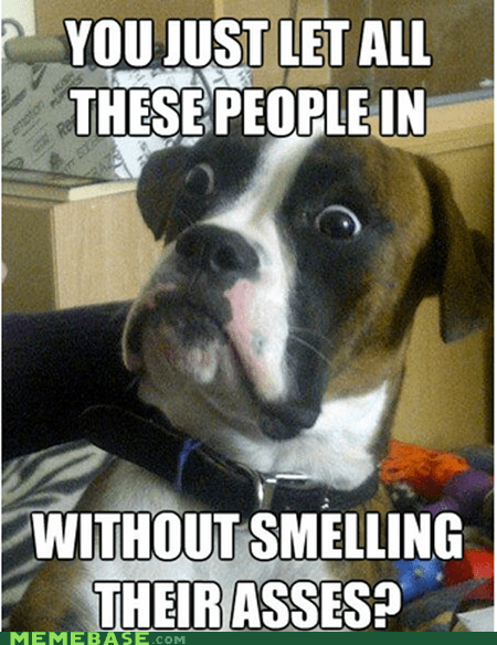 dumbstruck dog,Memes,people,smell