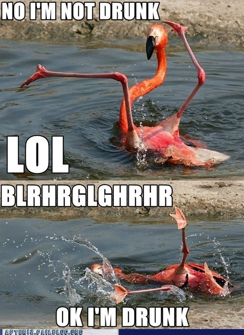 "Crunk Critters: ""Check Me Out, I Can Flamingo Dance!"""